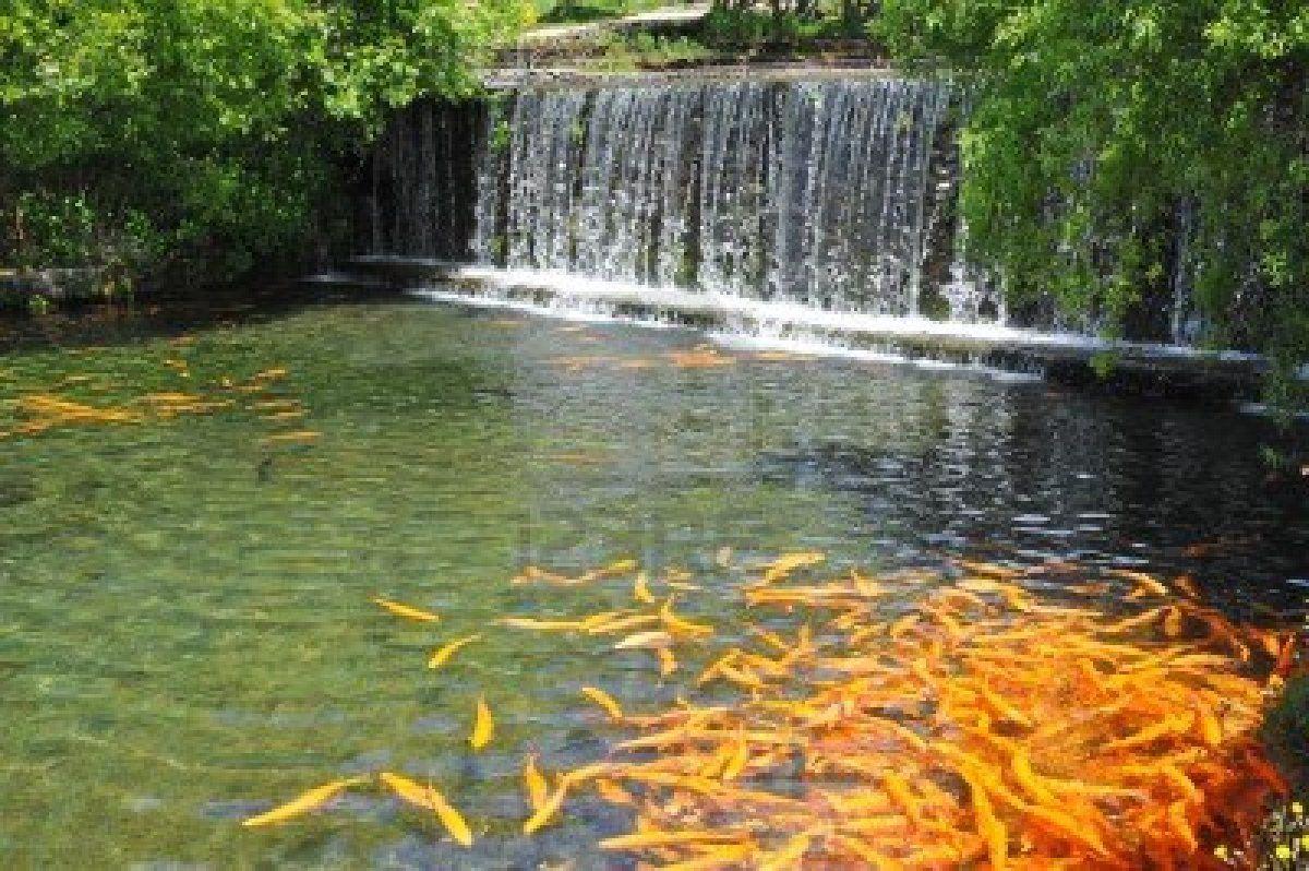 Backyard fish pond with landscape garden mini waterfall for Garden fish ponds
