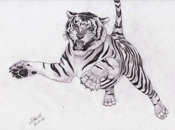 Tigre a lápiz - Animales | Dibujando.net | Drawing | Drawings, Tiger ...