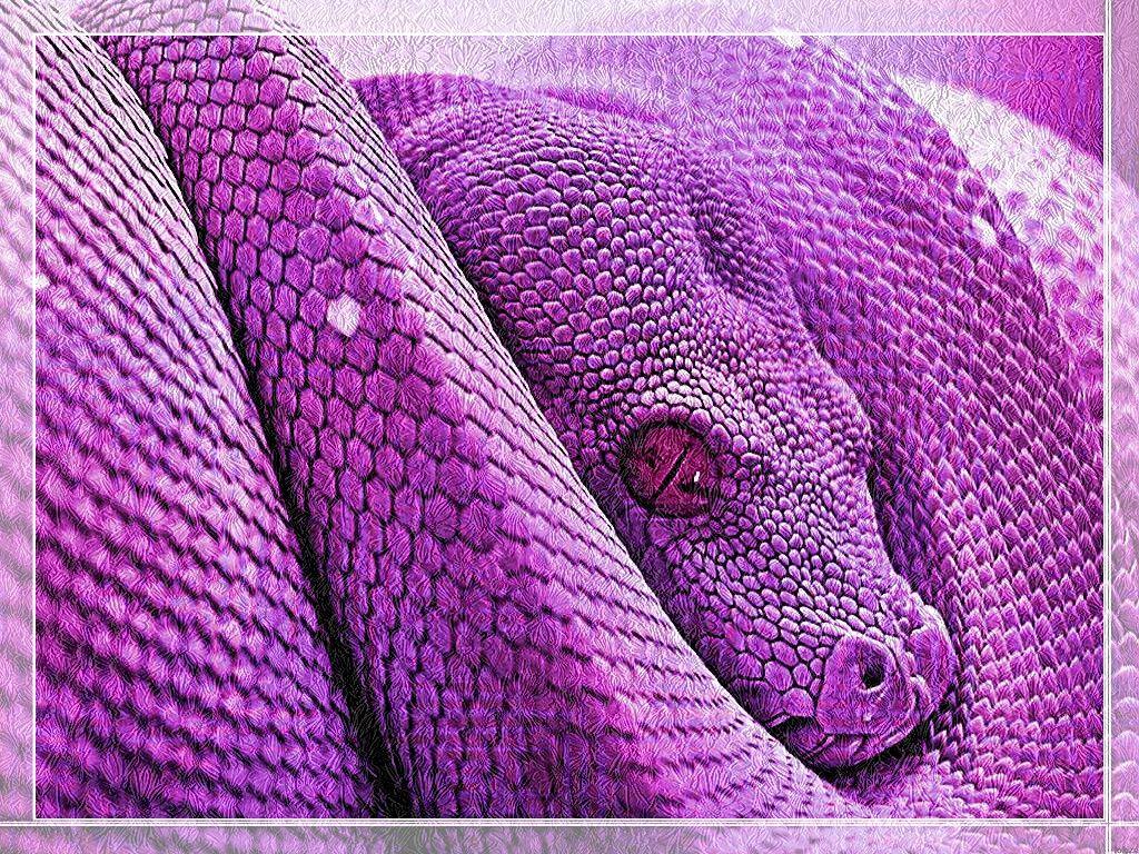 Картинки фиолетового змея