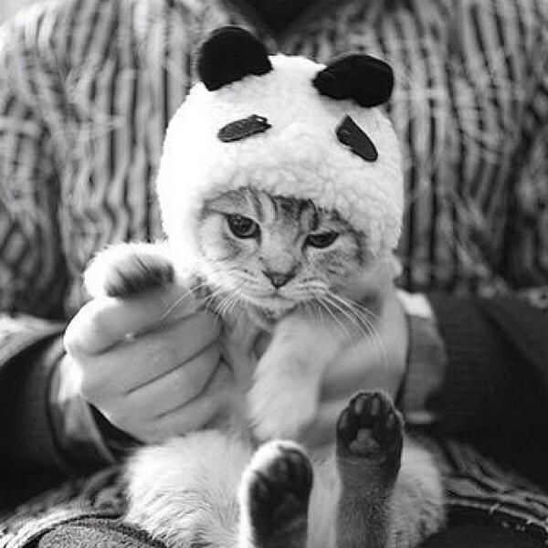 Not happy to be a panda.. pic.twitter.com/Yx5HirzVne