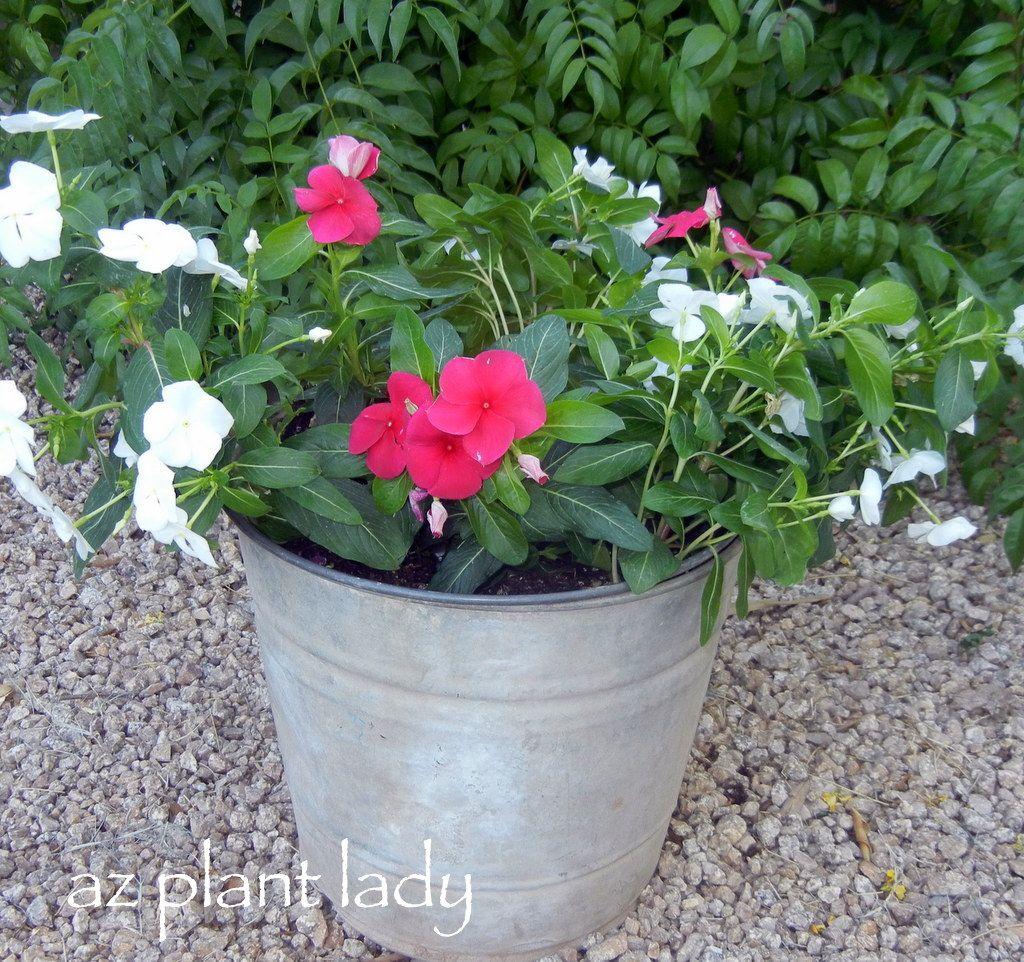 DIY Plant Containers-birdsandbloomsblog.com