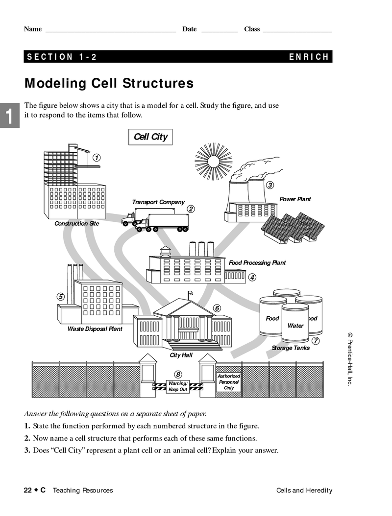 Page 1 Cell City Comparison Cell City Cells Project Cell City Project