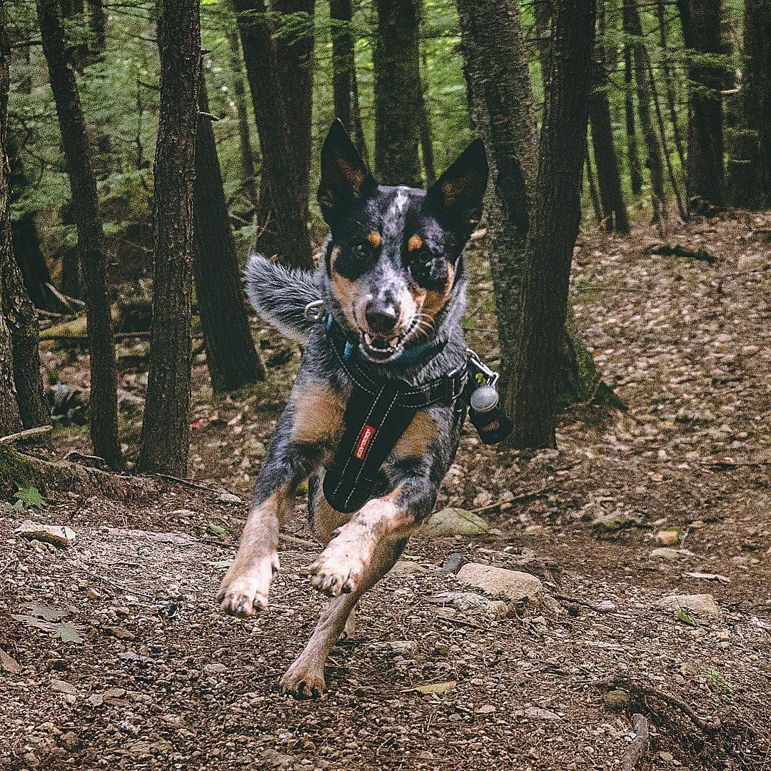 Jumping Into The Weekend With My Ezydog Chest Plate Harness