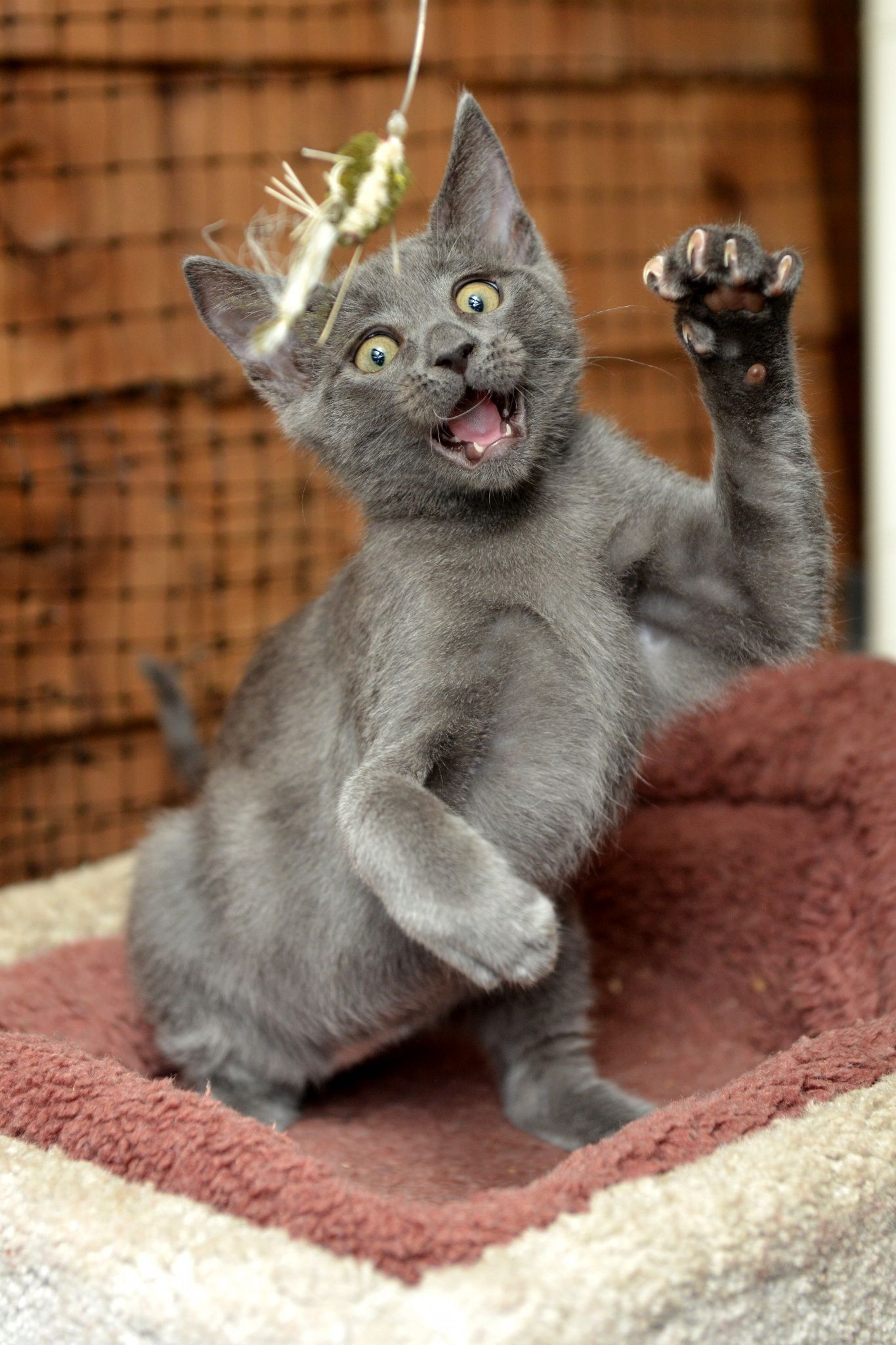 Attack Mode by Josh Norem on 500px Meow Pinterest