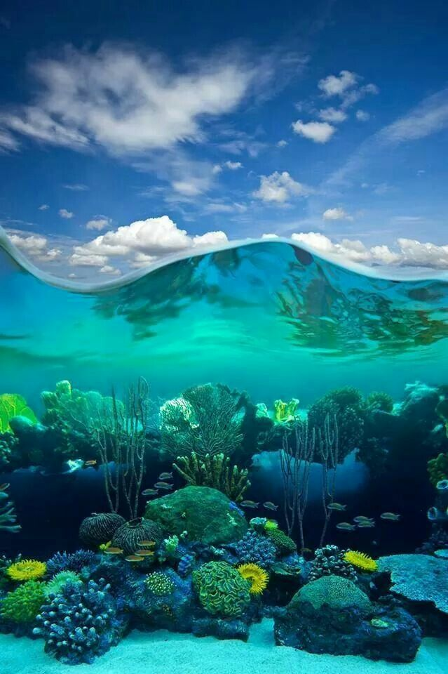 Underwater Coral Reef Underwater Photography Ocean Ocean Life Photography Ocean Underwater