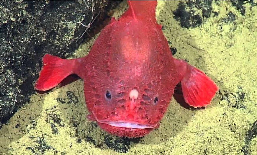 Weird Red Fish 3