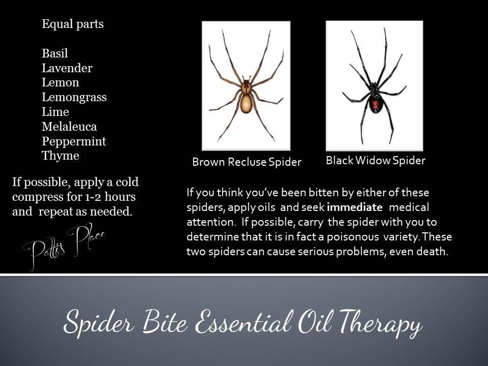Spider Bite Therapy