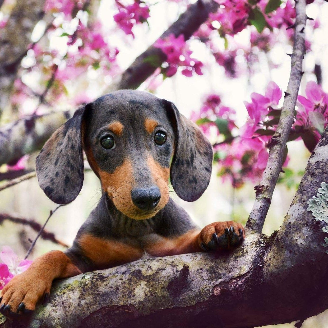 Pin By Zino On Animals And Pets With Images Dachshund Dog
