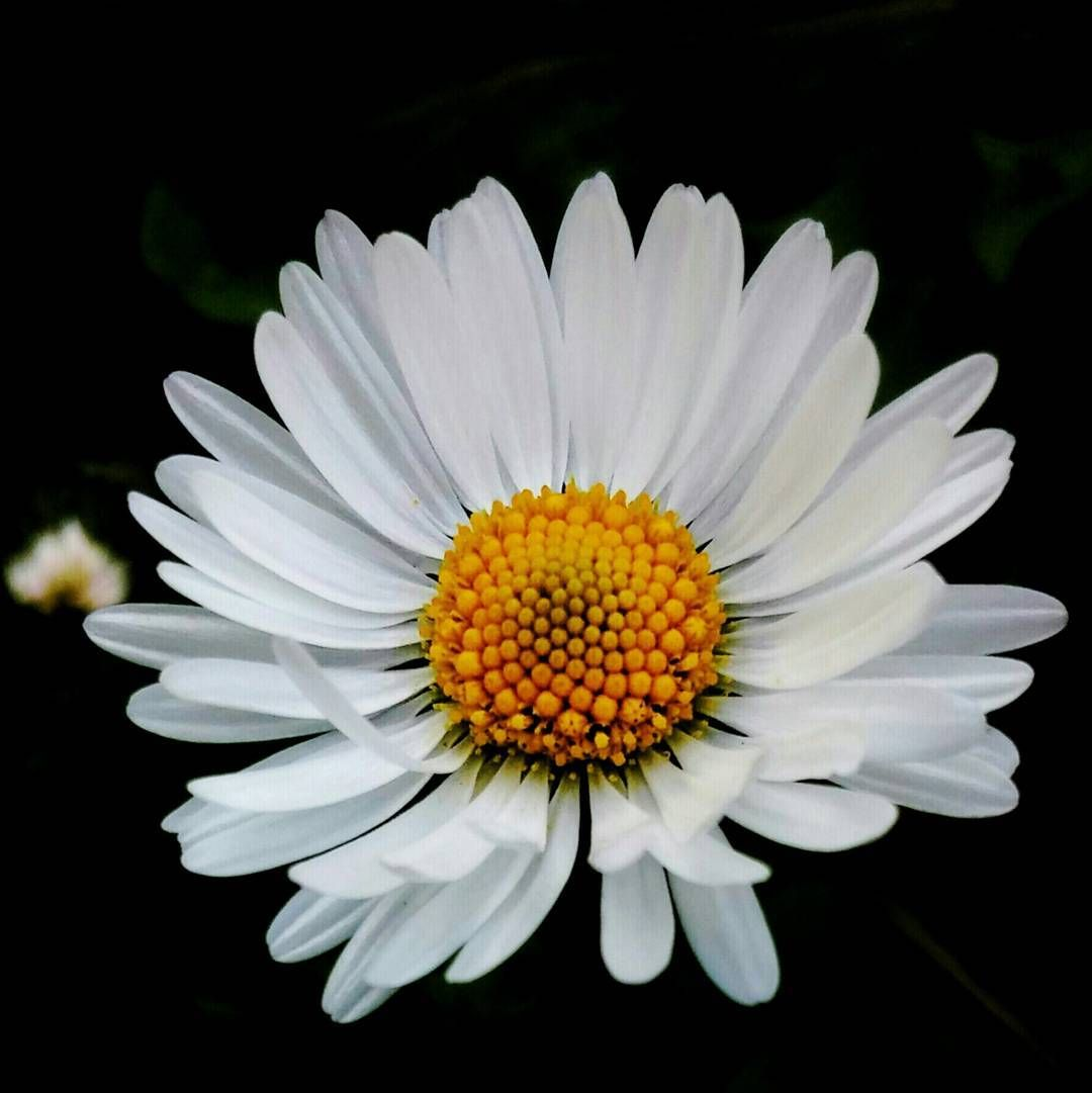 #flower #flowers #flor #macro_flower #_flowersworld_ #ponyfony_flowers #petals #florals #instaflower #flowersandmacro #flower_beauties_ #macro #makro #macroworld_tr #macro_vision #mta_macro #macro_highlight #nature #bestnatureshot  #instanature #nature_altinkare #turkobjektif #ig_photostars #turkinstagram #ig_europa #fotografheryerde #kadrajturkiye #objektifimden #ig_mood #hayatakarken by can.kal