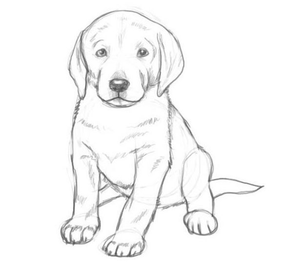 How To Draw Dogs in 2020 | Dog drawing simple, Dog drawing ...
