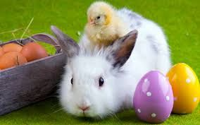 easter bunny chick and bunny cute easter animals adorable easter pictures rabbits easter photography easter chick Funny Easter Bunny, Easter Bunny Images, Easter Chick, Easter Hunt, Easter Monday, Easter Eggs, Easter Sale, Easter 2015, Easter Backgrounds