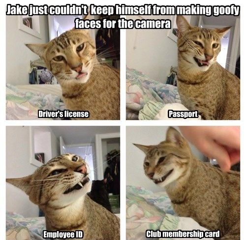 Not Too Ridiculously Photogenic Cat Funny Animals With Captions Cute Funny Animals Funny Animals