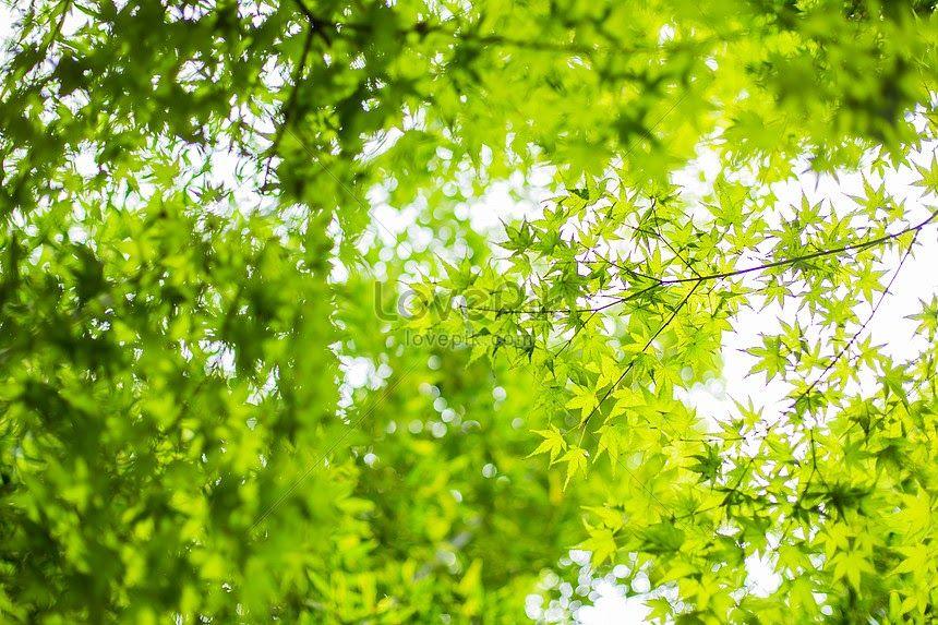 25 Background Power Point Tentang Pemandangan Alam Daun Maple Pemandangan Alam Latar Belakang Gambar Unduh Download Nat Pemandangan Latar Belakang Lanskap