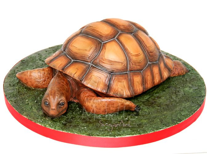 Turtle Cake Cake Decorating Pinterest Cake Animal cakes and