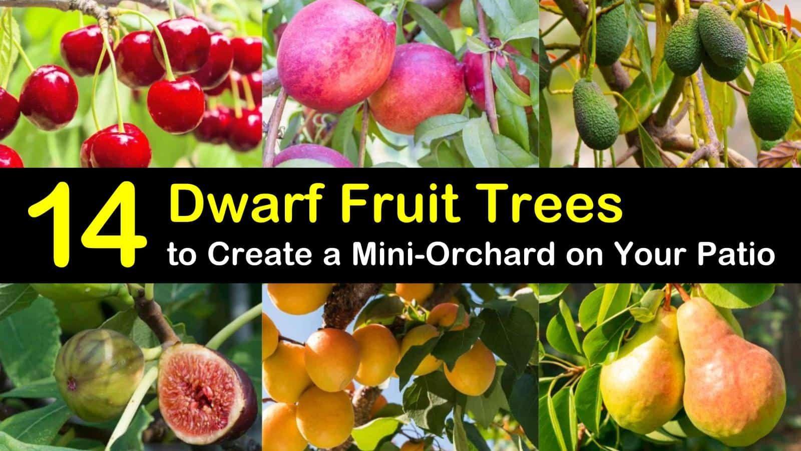 14 Dwarf Fruit Trees To Create A Mini Orchard On Your Patio Dwarf Fruit Trees Fruit Trees Uk Fruit Tree Garden