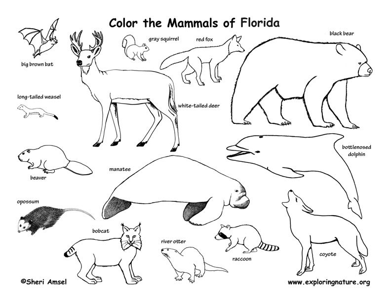 Florida Animal Coloring Pages Animal Habitats Animals Wild