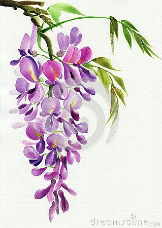 Wisteria Branch Flower Drawing Flower Painting Flower Art