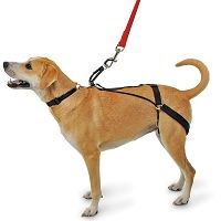 canine tug-preventing harness