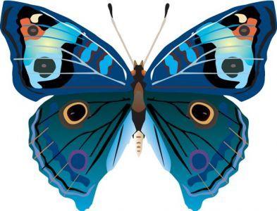 realistic butterfly vector butterflies printables pinterest rh pinterest com butterfly vector free download butterfly vectors illustrator