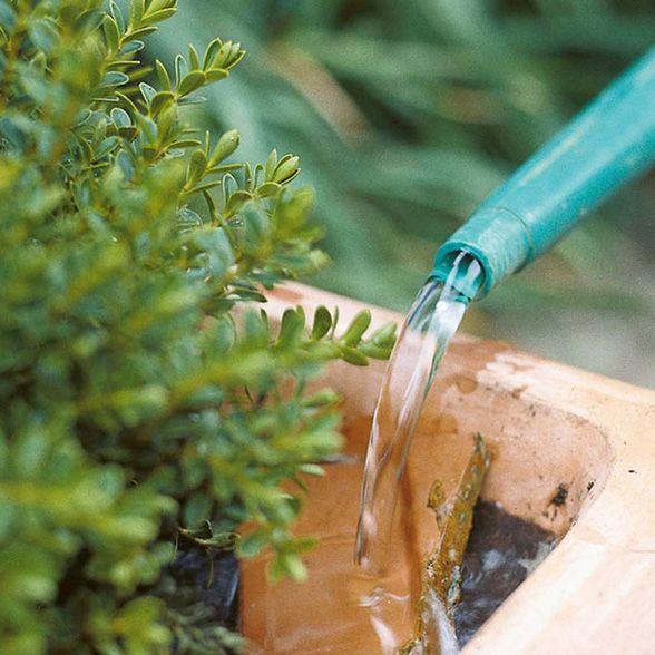 Water-wise Gardening Strategies