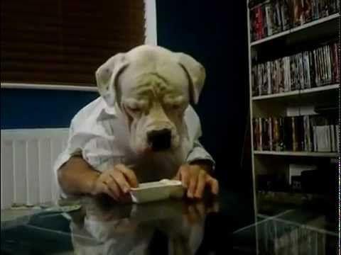Funny! Dog Eating Like a Human
