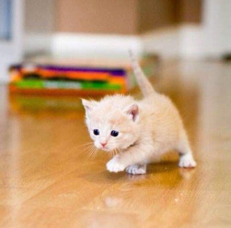So Tiny Sevimli Hayvan Yavrulari Hayvan Evcil Hayvanlar