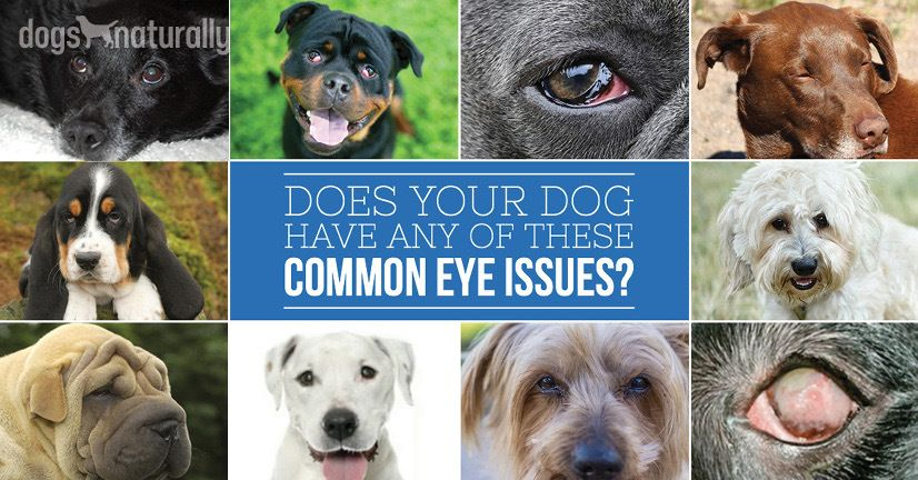 Yes You Can Manage Dog Eye Problems Naturally Dogs Eyes