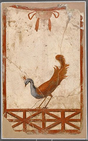Roman wall fragment with a peacock from 70 AD shows a beautiful bird. Several drawers wanted to bring birds with them in the afterlife.