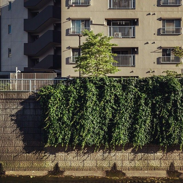 6647 http://sandman-kk.tumblr.com/post/126746126621 #street #river #daylight #wall #plant #buildings #tokyo #japan #2015