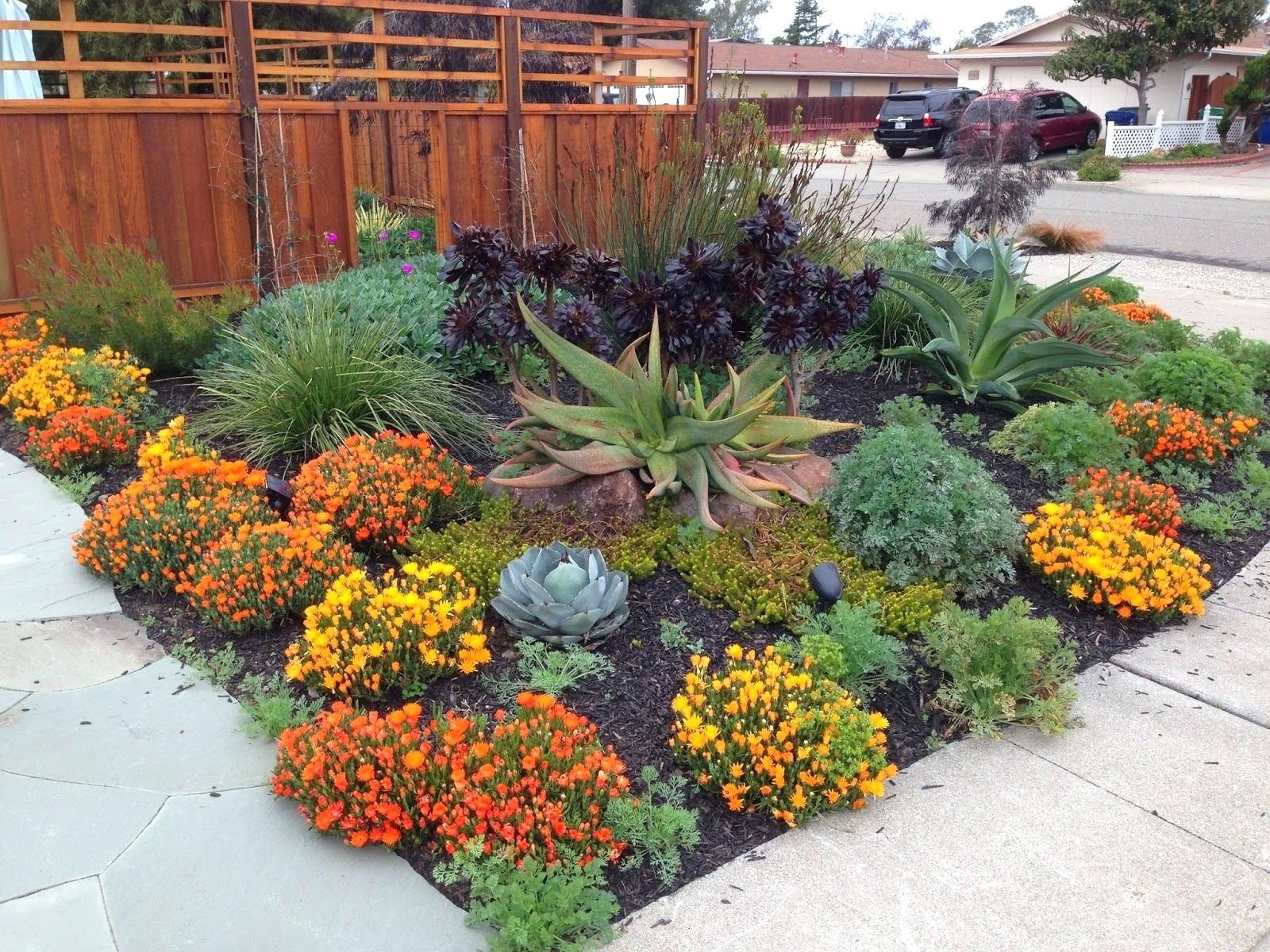 Drought Tolerant Plants Florida Zone 9 Flowering Full Sun Drought Tolerant Garden Drought Resistant Landscaping Drought Tolerant Landscape Design