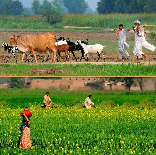 Colors of Punjab.