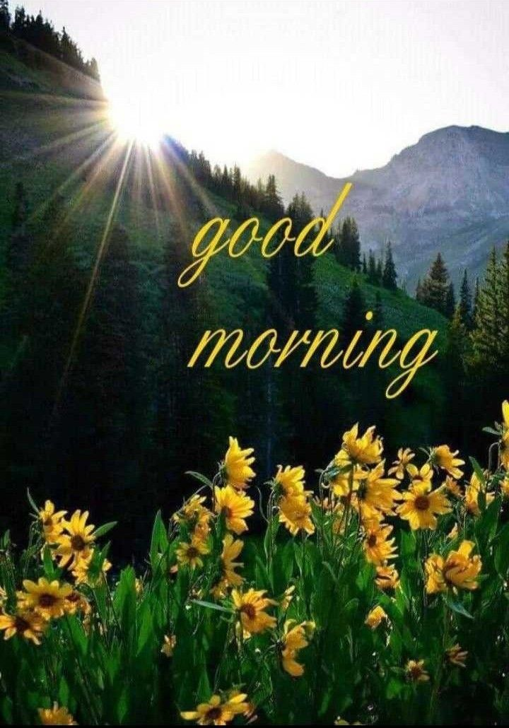 Pin by M.P.singh on प्रात वन्दन MP Good morning images