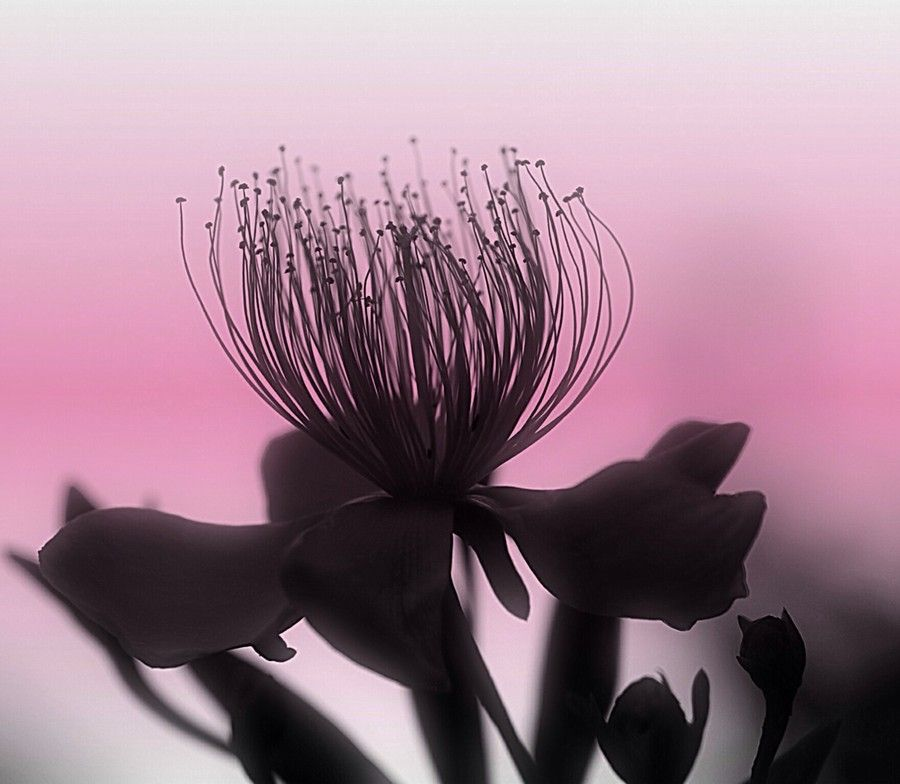 Untitled by Yuuji Oh on 500px