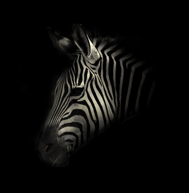 Stunning black and white portraits of exotic zoo creatures