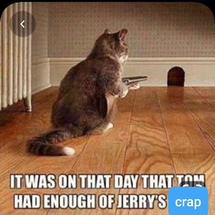 Pin By Hpfoxxxx On Animal Memes Funny Cats Monkeys Funny Funny Cat Memes