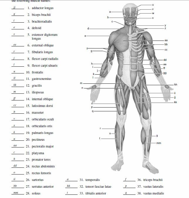 Blank Muscle Diagram To Label