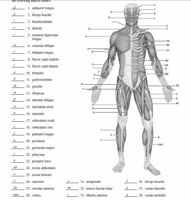 medical terminology of skeletal system diagrams