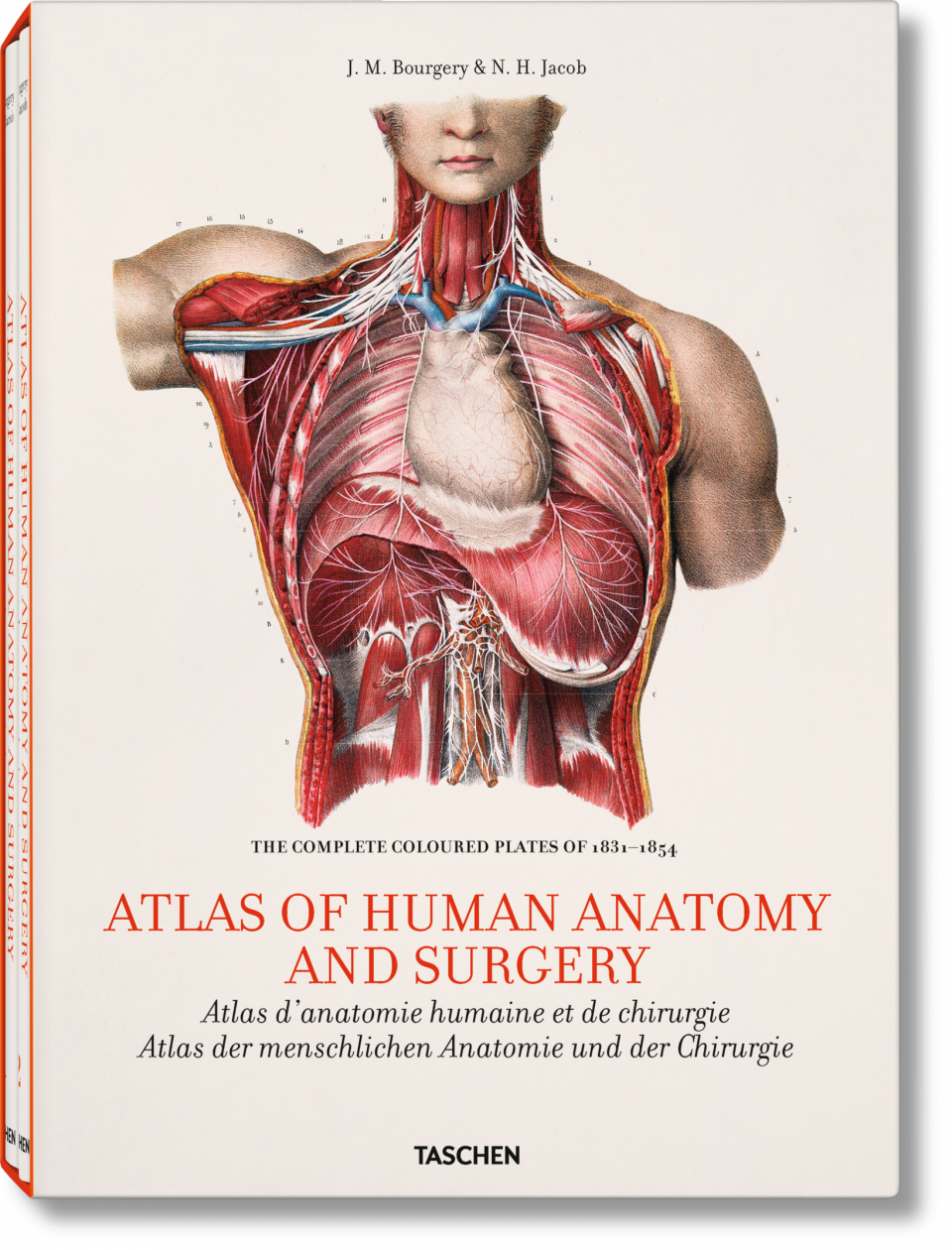 Bourgery. Atlas of Human Anatomy and Surgery | my pins | Pinterest ...
