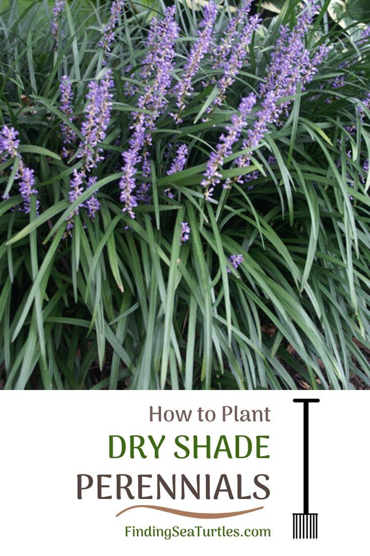 Fiori Tappezzanti Per Aiuole tips for planting dry shade perennials nel 2020 (con immagini)