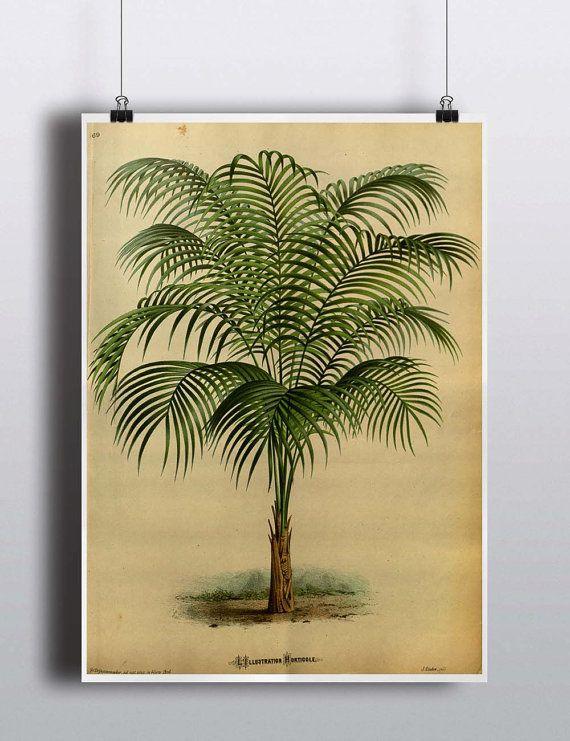 Antique 1800s Palm Tree Print Art Print Poster Palm Tree Wall Decor Nature Botanical Botany Wall Decor