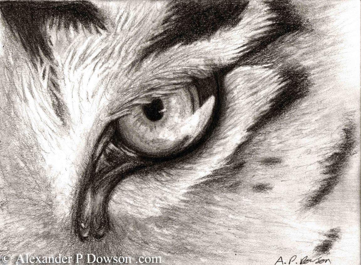 Tigre Sketch: Tiger Eye Sketch #tiger #eye #art #drawing #pencil