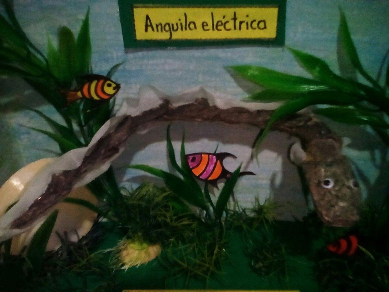 Anguila eléctrica en su habitad en material reciclable,CERdL ...