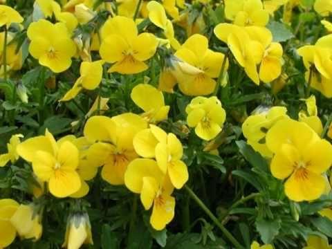Blumenlied flower song op 39 gustav lange piano music blumenlied flower song op 39 gustav lange mightylinksfo Images