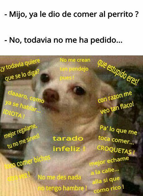 Pin De Natalia Castillo Romero En Memes Y Mas Memes Divertidos Chistes Graciosos Humor De Animal
