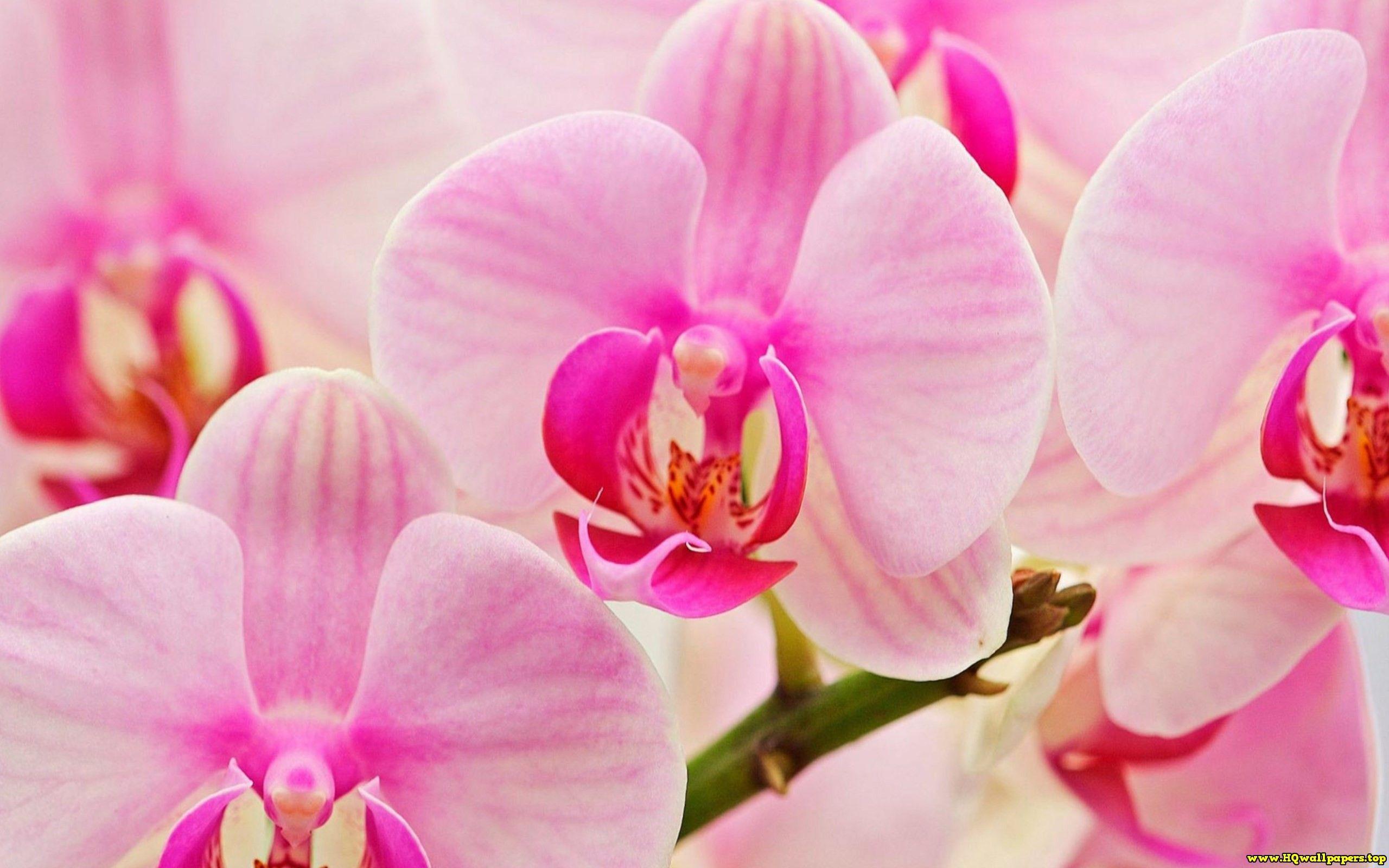 Orchids hqwallpapersp pinterest orchid