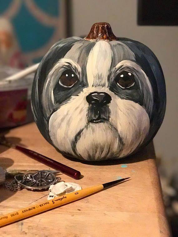 Lhasa Pumpkin Dog Pumpkin Cute Dogs Breeds Shih Tzu