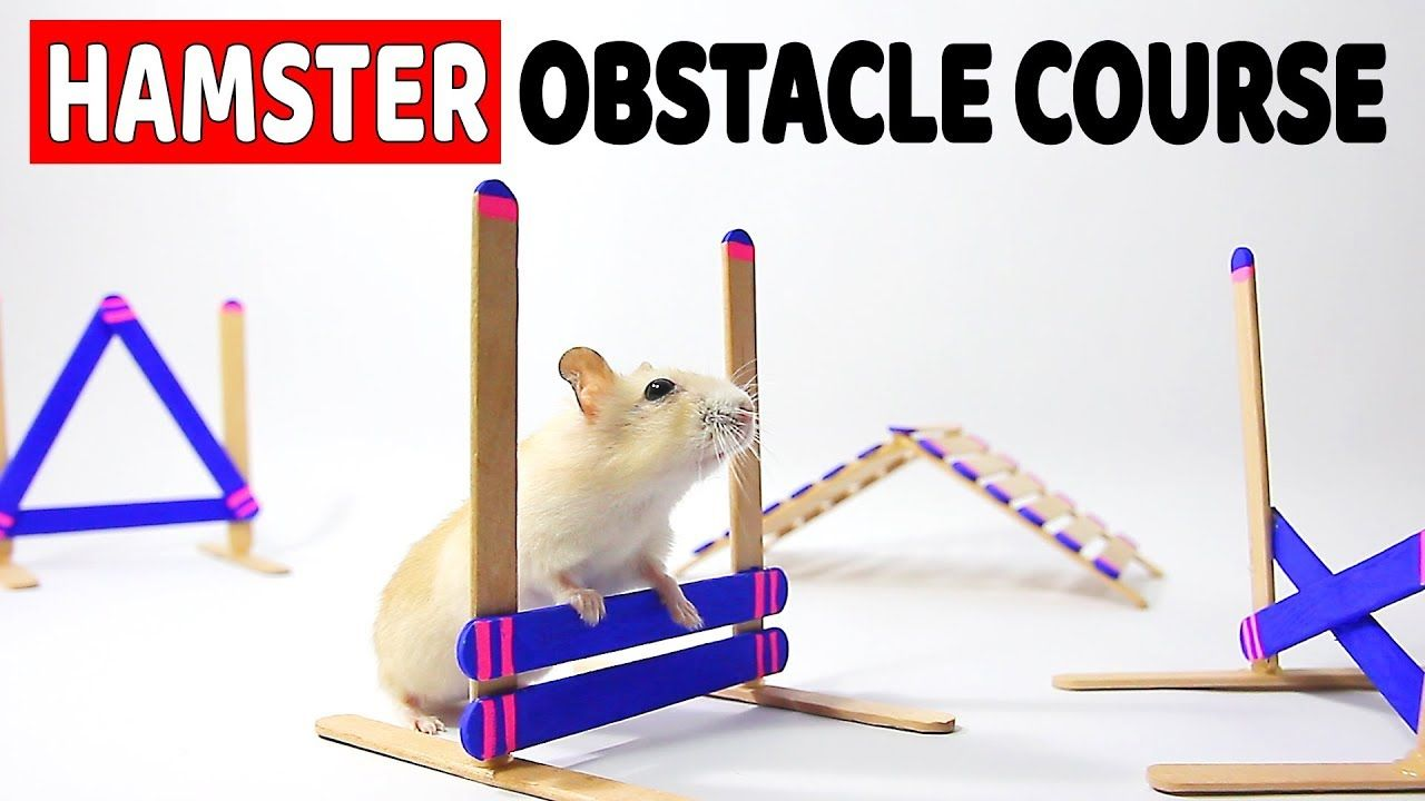 Funny Hamsters Videos Compilation 2017 Cute And Funniest Hamster