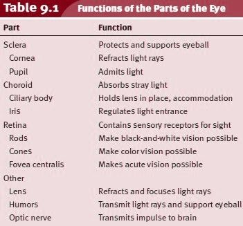 Functions of the Parts of the Eye   Eye anatomy, Parts of ...