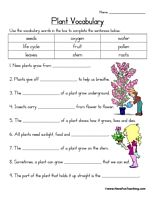 Plant Vocabulary Worksheet
