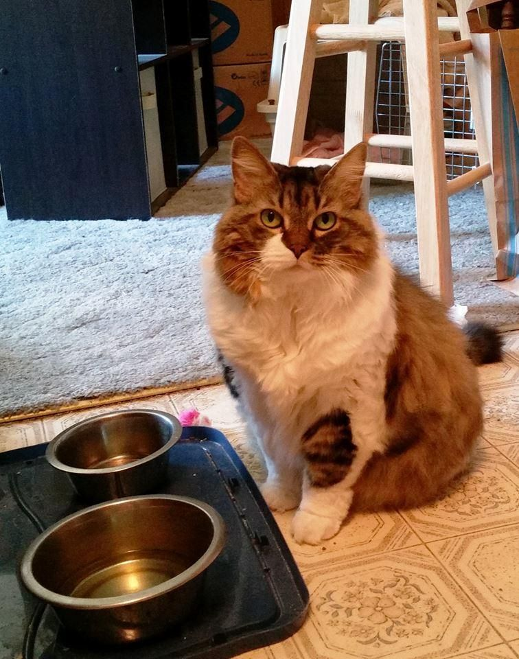Adopt Edith (in foster) on Long haired cats, Cat eye